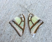 Real Moth Butterfly Wing Earrings, Earthy Organic Jewelry, Natural, Bohemian Jewelry, Unique Gift, BW172