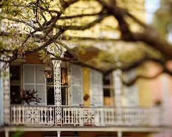 "New Orleans Art French Quarter Photograph.  ""Esplanade Ave"" Print. Mardi Gras. Yellow, Brown, White, Oak Tree"