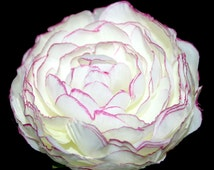 1 Cream and Violet Tipped Ruffle Ranunculus - Artificial Flower Heads, Silk Flowers