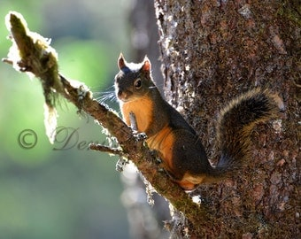 Red Squirrel Nursery Art - Squirrel Photo Easter Gift - Squirrel Gifts for Kids - Wildlife Animal Print