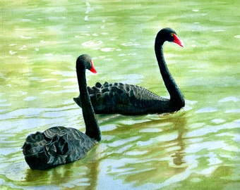 Two Black Swans Art Watercolor Painting Original Swimming on a Pond 10 X 14