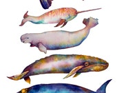 Whale POSTER - Signed Print of my Original Watercolor Grouping - Whale Pyramid #5 - Watercolor Whales - Narwhal Bowhead Orca Grey Whales