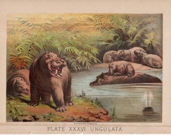 1880 HIPPOPOTAMUS ANTIQUE lithograph original antique African animal print