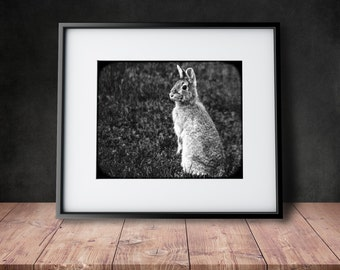 Woodland Bunny Photograph - Mademoiselle Lapina - Black & White Photograph