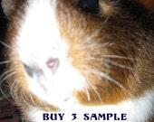 Buy Any Three Sample Eye Shadows | Cruelty-Free| Pure Vegan Mineral Eye Shadows |Makeup Gift Sets |Weddings Your Choice
