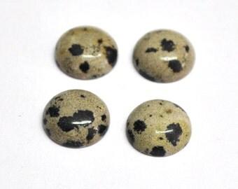 Natural Dalmatian Jasper Round Cabochons - 4 pcs Parcel - 10.0 x 4.0 mm - 11.1 ct - 151006-23