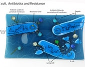E coli Antibiotics Resistance Fused Glass Dish