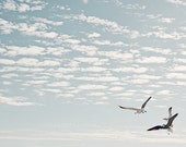 seagull art, coastal prints, seagull pictures, ocean decor, beach decor, nautical decor, bird photography, seagull wall art, seagull prints