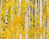 Gold Birch Landscape Medley - Elizabeth Studio - Fat Quarter