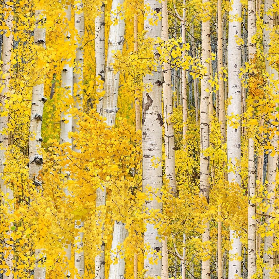 Gold Birch Landscape Medley - Elizabeth Studio - Half Yard ...