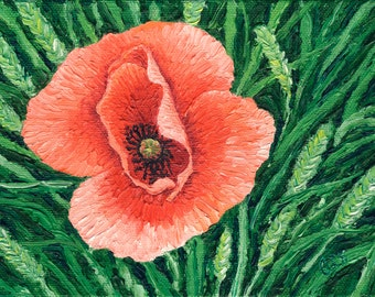 Pink Poppy, 5 x 7 in., giclee print