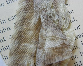 """Cruelty Free No. A4 Plus Inch """"Circle of Life"""" Australian Woma Sand Python Snake Skin Shed - 15"""