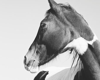 Modern Horse Photography, Paint Horse art, Black and White Animal Photograph