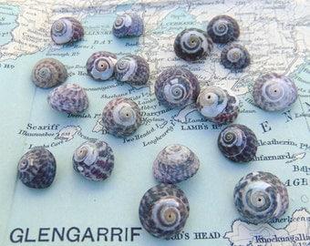 Irish Sea Shells Natural Seashells Small Beach Shells from Ireland Shells Craft Shells Shells for Crafts or Jewellery Jewelry Making