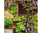 Fine Art Color Travel Photography of Wisteria on Home in Alsace - Zellenberg France