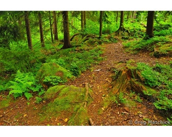 Fine Art Color Nature Photography of a Woodland Path in Finland