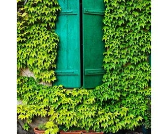 Fine Art Color Travel Photography of Green Shutters and Ivy in Riquewihr France