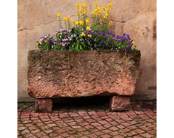 Fine Art Color Photography of Old Stone Planter and Flowers in Kaysersberg France