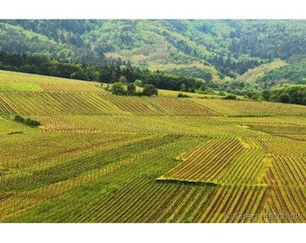 Fine Art Color Photography of French Landscape - Vineyards of Alsace Below Zellenberg France