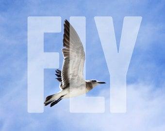 FLY 5x5 print - bird, flying, inspiration, flight, soaring, sky, clouds, seagull, gull, beach