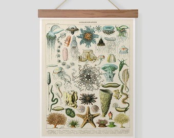 Vintage French Print of Ocean Sea Life Pull Down Chart