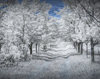 Cherry Orchard at the Cherry Point Farm Market near Shelby Michigan in Infrared No.0072 Summer Fine Art Landscape Photography
