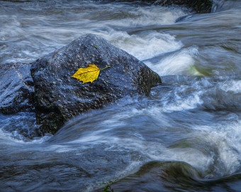Yellow Leaf caught on a Rock in the Rocky Broad River in October in North Carolina No.1713 Fine Art Mountain Stream Autumn Photography