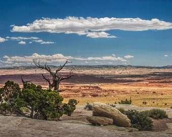 Desert Mesa in Utah with Juniper Trees and Overhanging White Cloud No.08102 Fine Art Western Landscape Photography