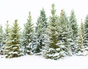 Holiday 2016 Snowy Pines, Winter Forest Art Print, Winter Image, Photography Print, Trees, Snow Image, Home Decor Art, Pine Trees In Snow