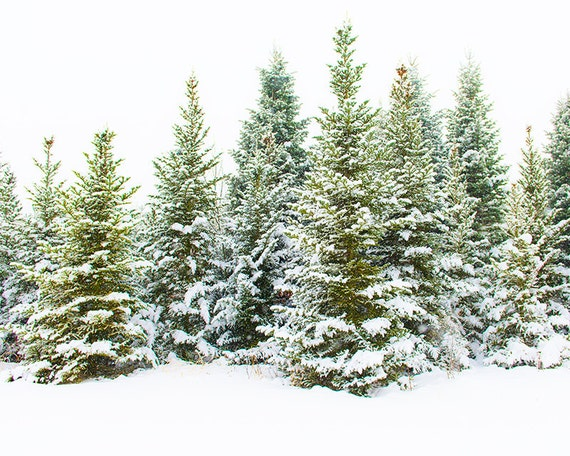 Forest Print, Nature Print, Forest Photography, Nature Photography, Forest Wall Art, Nature Landscape, Snow Print, Winter Wall Art