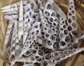 Center Sliced Cut Terebra Turritella Shell Long Spiral Top Seashell DIY Mermaid Crown Shells Wind Chimes Frames Sailor Valentine Craft Arts