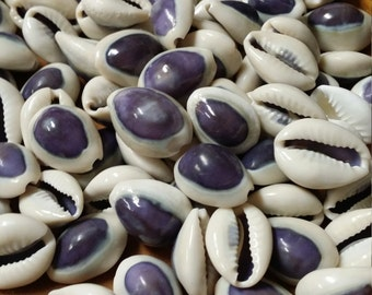 Purple Top Cowrie/ Cyprea Annulus Sea Shell Supplies Perfect for Crafting, Decorating, Filling Jars