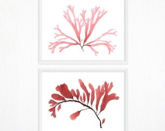 Seaweed Botanical Print Set - Any TWO Watercolor Art Prints / 8x10 OR 8x11 Modern Wall Art, Minimal Wall Decor