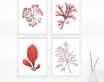Seaweed Watercolor Print Set, Any FOUR Seaweed Art, Sea Botanical Prints / 8x10 OR 8x11 Coastal Wall Art, Beach Decor