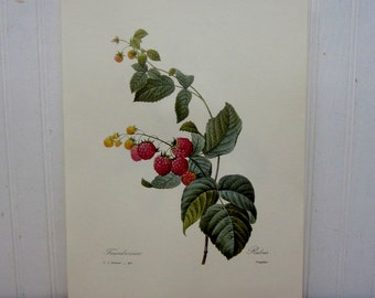 Vintage Raspberry Fruit Book Page Ephemera Kitchen Wall Decor