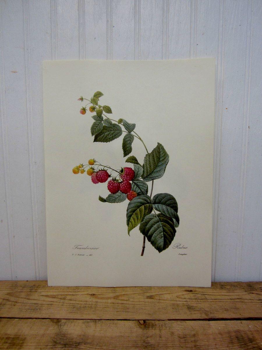 Vintage raspberry fruit book page ephemera kitchen wall for 101 vintage kitchen decorating ideas