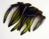 Natural Green Laced Hen Hackle Olive Green Hackle Feathers for Fishing Craft Small Green Craft Feathers Wholesale, 12