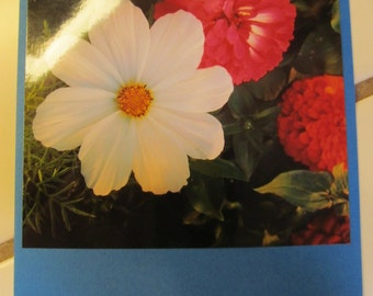 Instagram Photo Card -- Pink Zinnia, White -- Blue Card -- Greeting Card -- Blank Inside