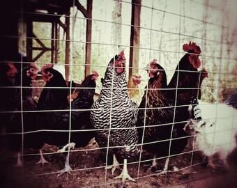 Farmhouse Cottage Farmhouse Kitchen Wall Decor Chicken Farm Animal Photography