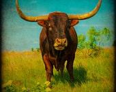 Western Photography, Longhorn Photograph, Texas Landscape, Fine Art Photograph, Rustic Home Decor