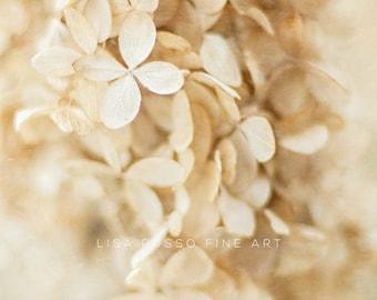 Dreamy Beige Hydrangea Print or Canvas Art, Winter White Decor, Botanical Print, Vintage Hydrangea Print, Beige Tan Cream, Vertical.