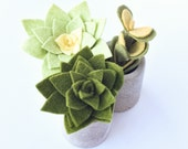 Set of 3 - Mini Beveled Edge Concrete Planter with Felt Succulents - Mossy Greens