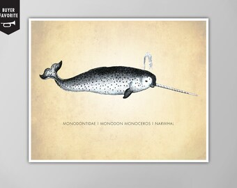 Narwhal Art Print, Narwhal Natural History Poster, Narwhal Natural History Scientific Print, Narwhal Print, Narwhal Poster, Narwhal Print