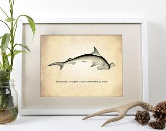 Hammerhead Shark Art Print, Shark Art Print, Natural History Poster, Natural History Shark Print, Shark Poster, Hammerhead Shark Art Print