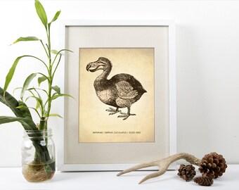 Dodo Bird Print, Dodo Bird Art Print, Natural History Poster, Natural History Scientific Print, Dodo Bird Poster, Dodo Bird Print, Art Print