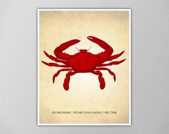 Red Crab Art Print, Natural History Art Print, Natural History Poster, Natural History Scientific Print, Red Crab Poster, Red Crab Art Print