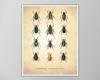 Beetles Art Print, Insect Scientific Art Print, Beetles Natural History Poster, Natural History Beetle Art Print, Beetles Poster, Beetles