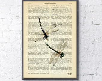 Summer Sale Dragonfly Dictionary Book Print - nature art house decor wall art Altered art on upcycled book pages BFL026