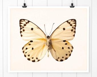 Photography, Butterfly art, butterfly photography, butterflies art print wall art, yellow,  beige spring bathroom decor fine art print