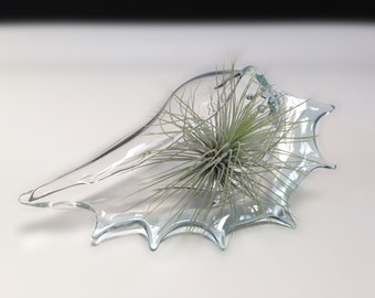 Glass Seashell Terrarium , Planter , Air Plant Vase , FREE SHIPPING